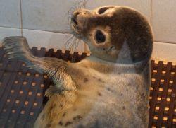Baby Seal Natureland