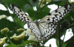 Butterfly Natureland