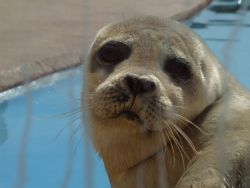 Cute Seal Natureland